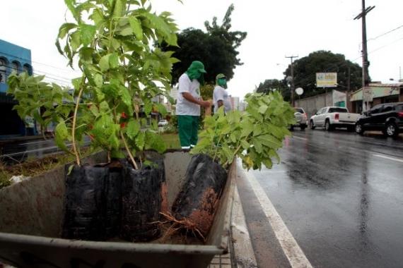 Planta Natal retoma plantio de árvores nativas na cidade